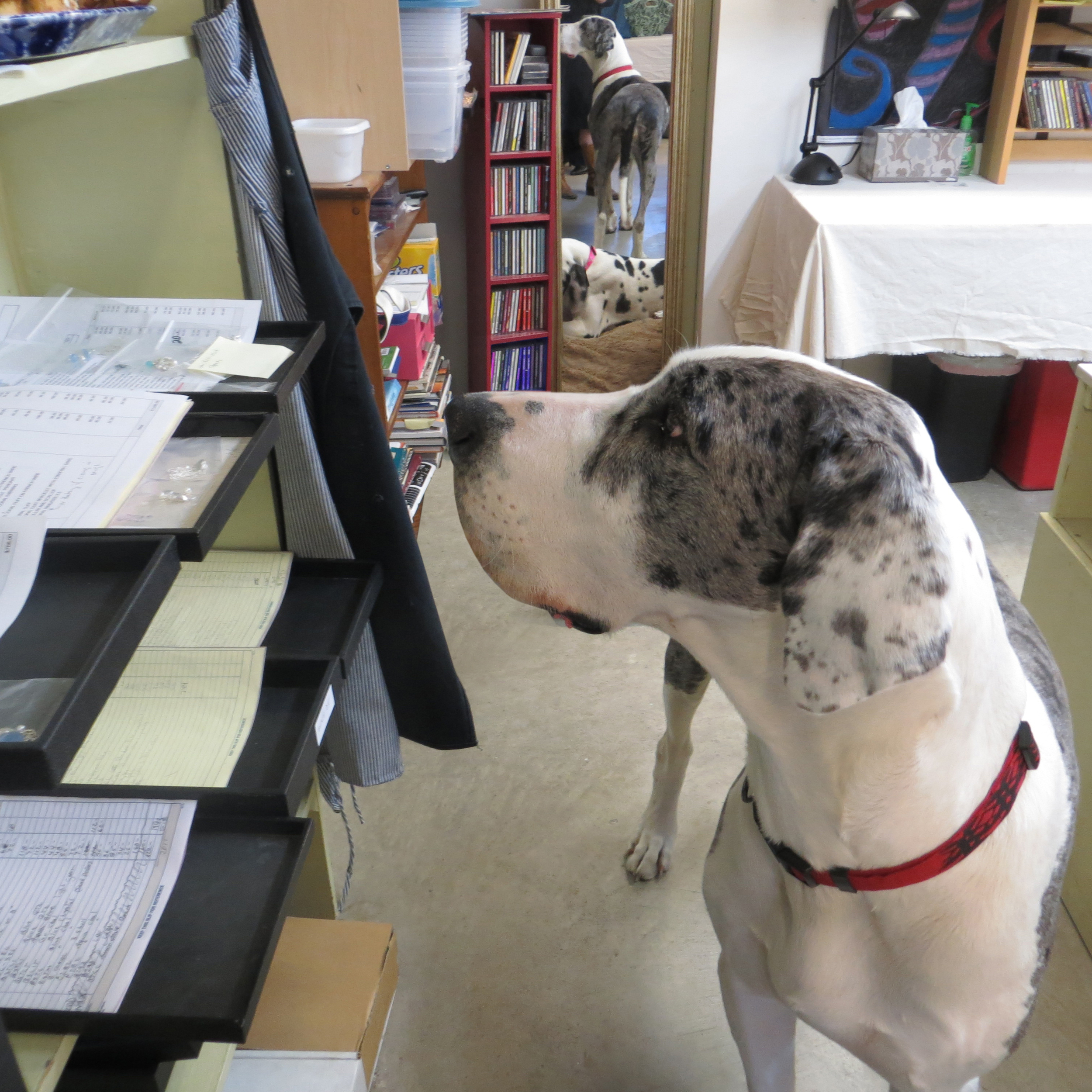 Scarlet: Making sure orders are being done correctly