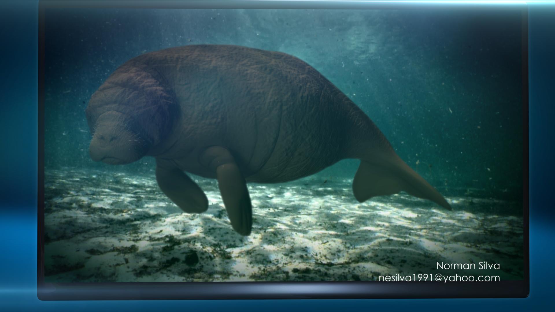 Visualizations-Norman Silva- Steller Sea Cow.png
