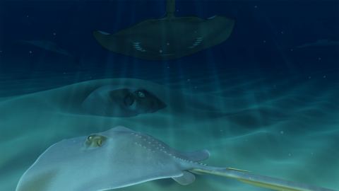 Grand Cayman's Famous Stingrays - 0;00;00;00Modeling, Texturing, Rigging, Animating, Lighting, Rendering, CompositingMaya, Photoshop, After EffectsRendered background and each stingray in separate layers, AO layer; created particle effects for water floaties; worked with producer and scientist to assure correct anatomy and movement; used numerous reference images