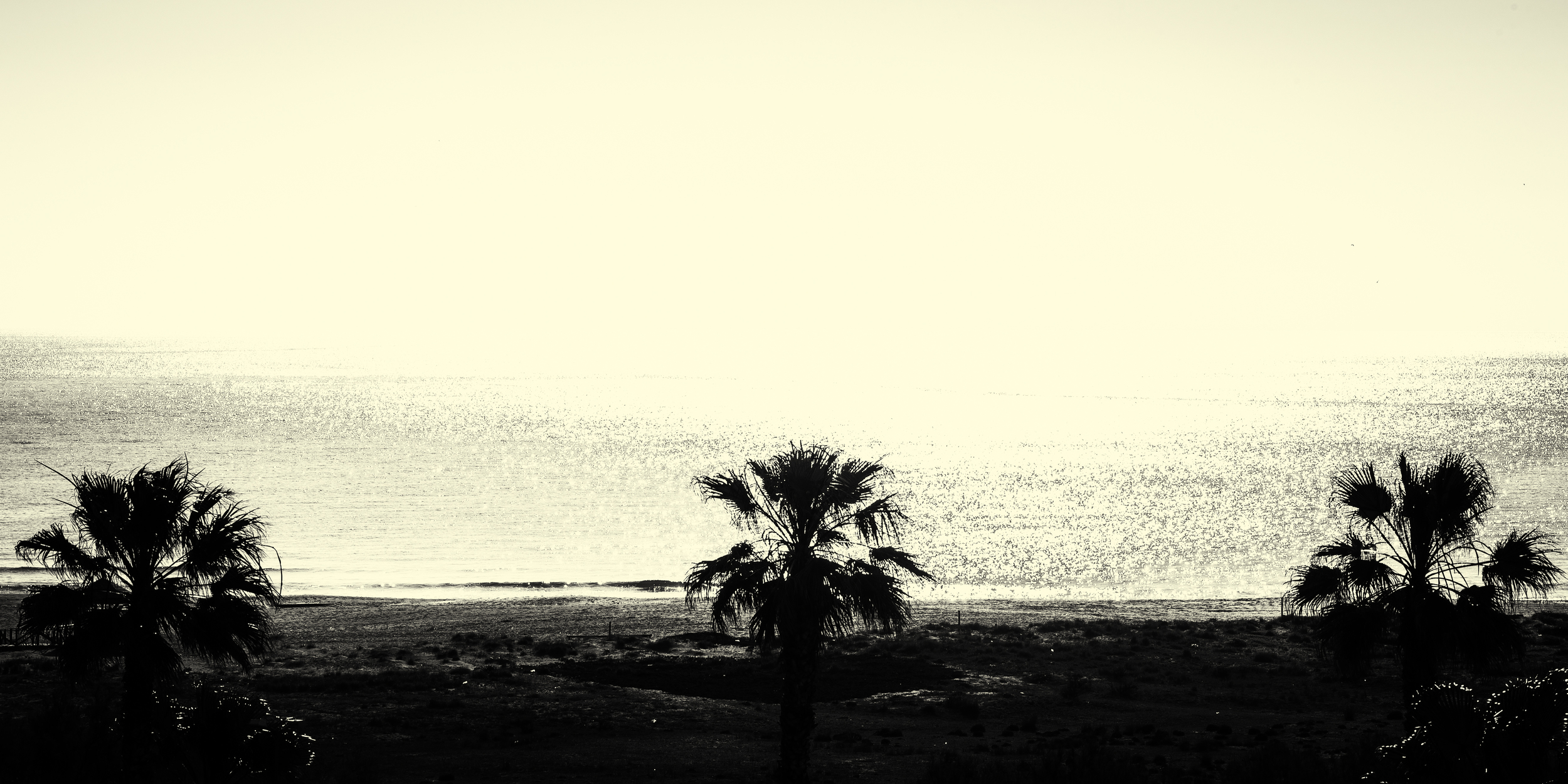 Palm trees of Sotogrande Spain