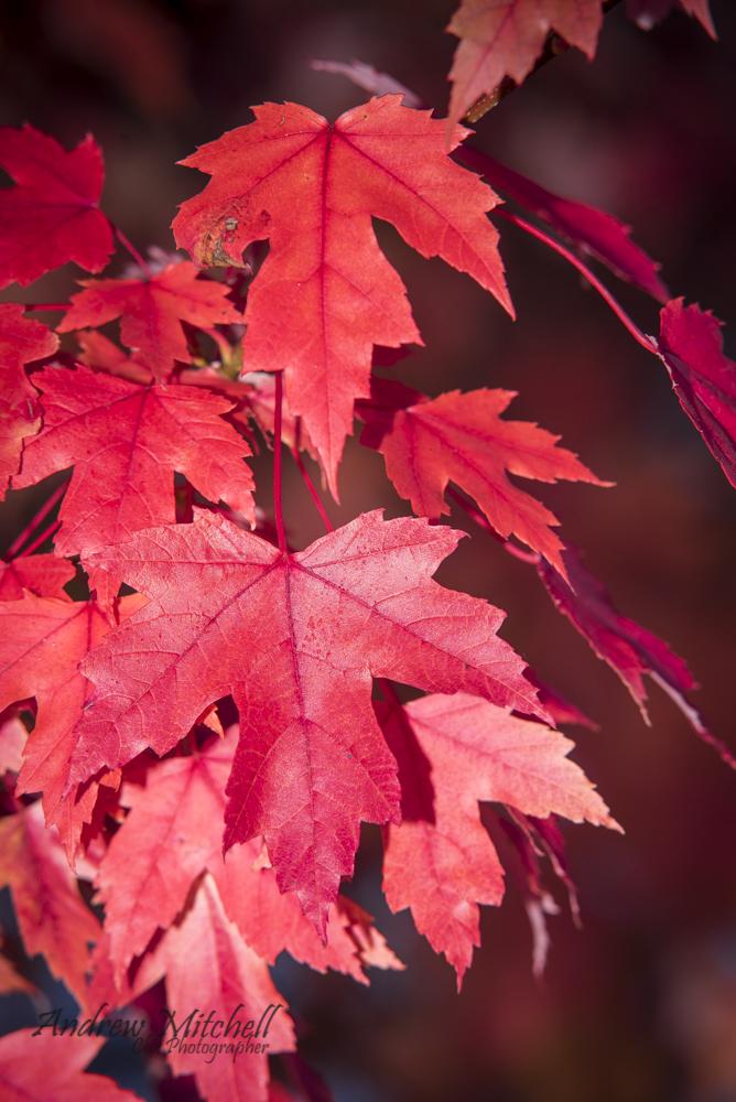 Red Chamonix.jpg