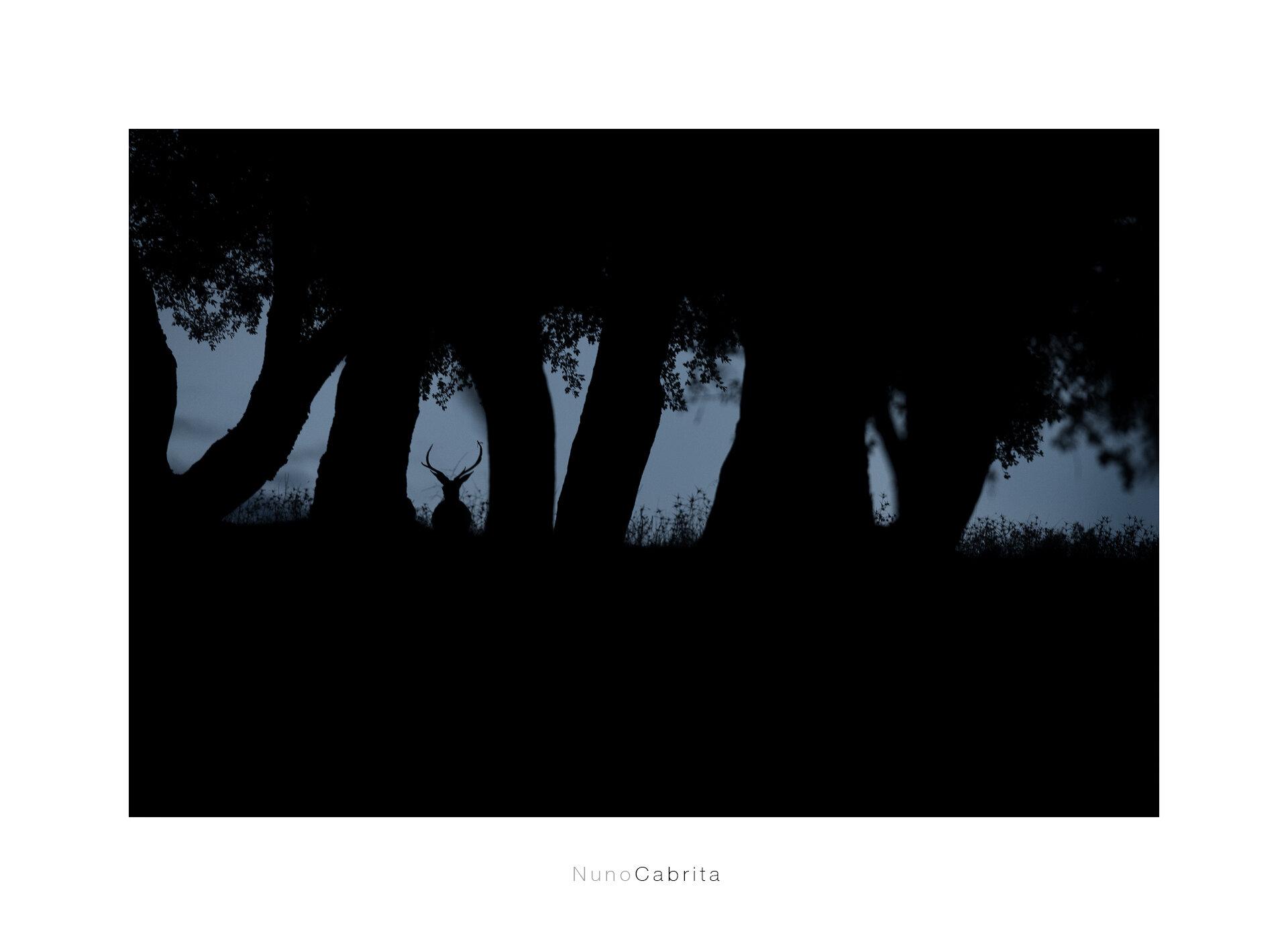 cervus elaphus.jpg