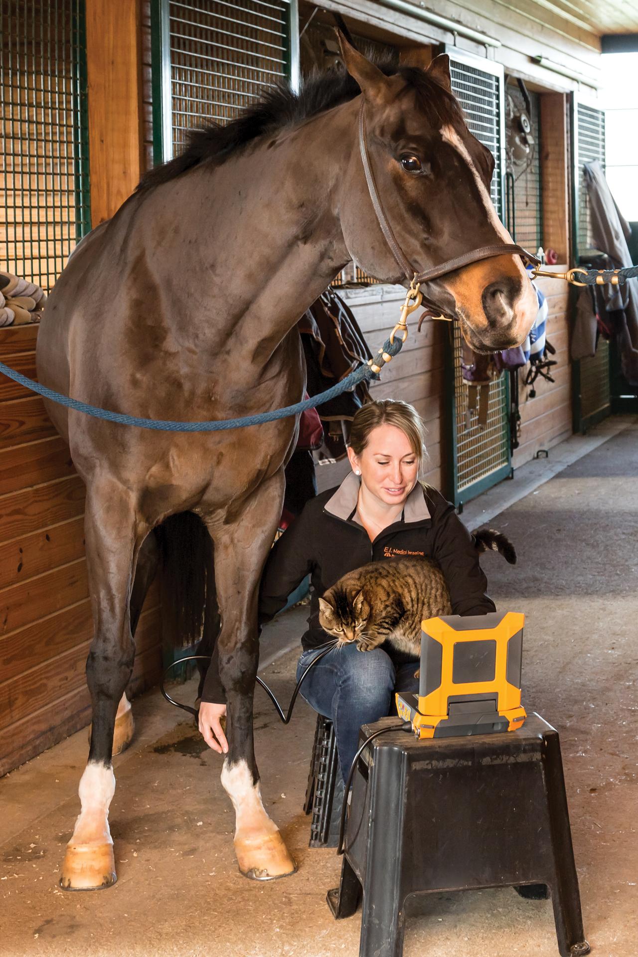 horse + vet + cat.png