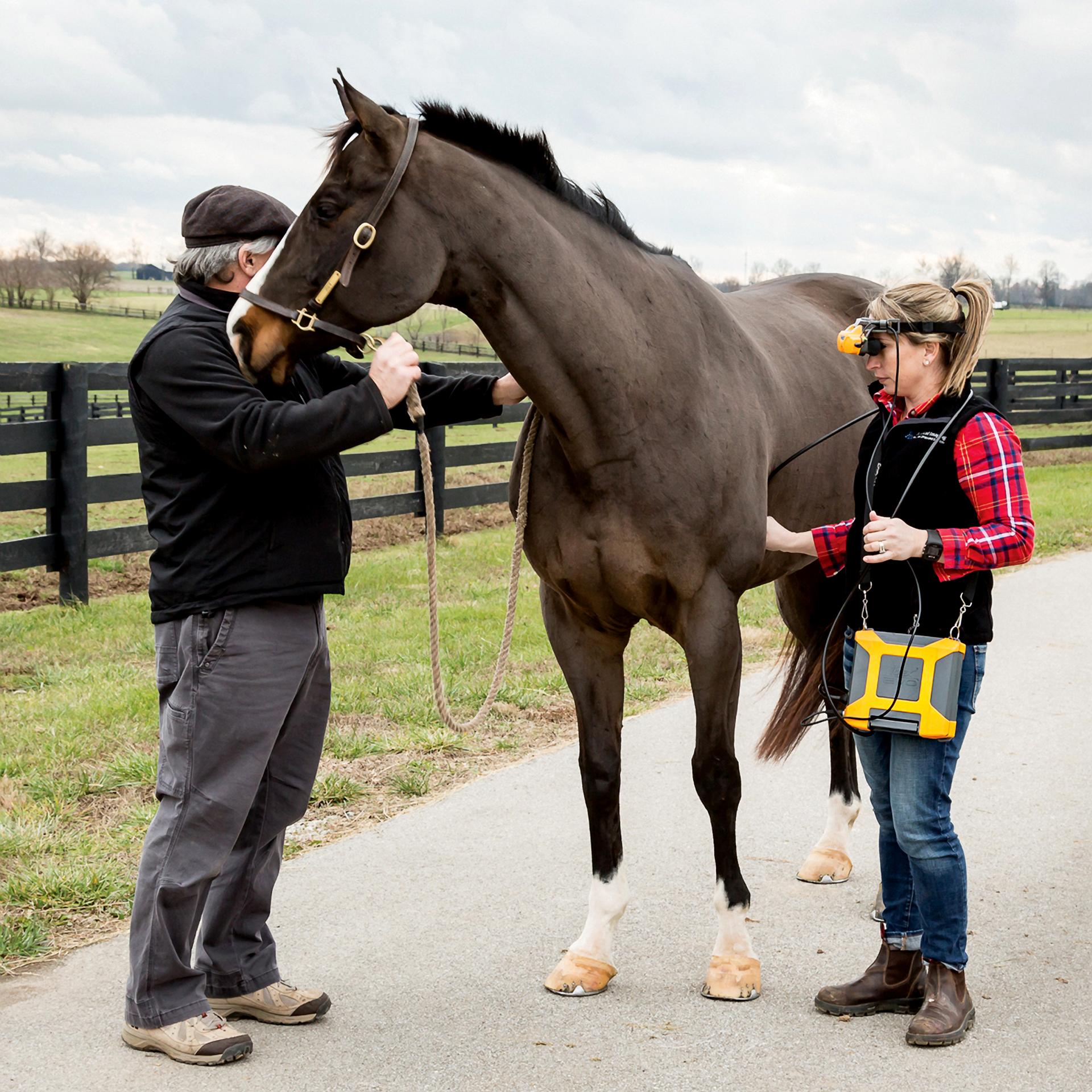 EVO + vet + horse in field.png