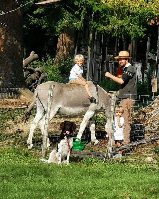 C'est si bon la famille!  #froidcour #châteaudefroidcour #sheep #shepherd #farm #countryside #castle #gite #vakantiehuis #airbnb #dogsofinstagram #animals #munsterlander #nature #donkey #family