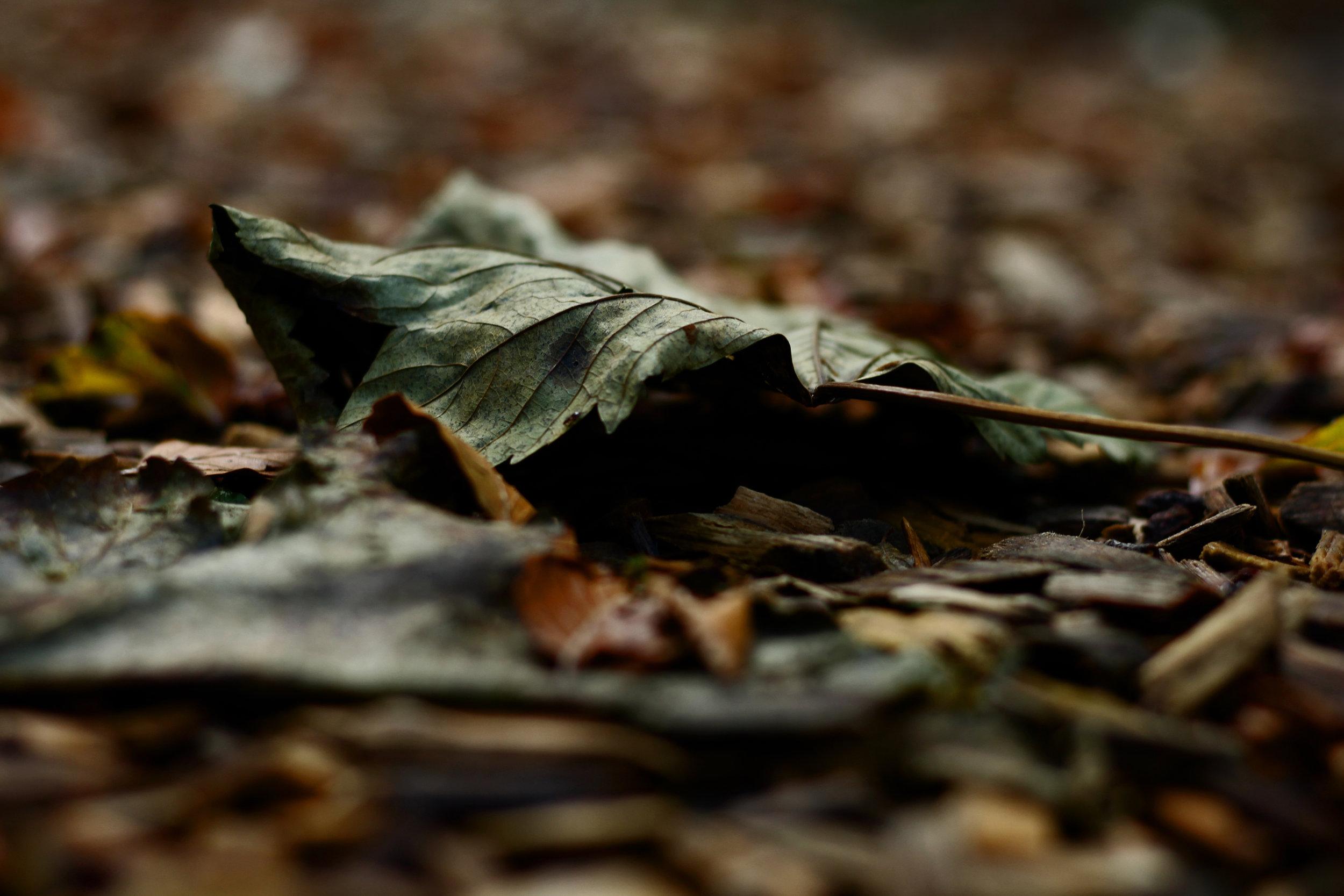 Autumn leaves falling...