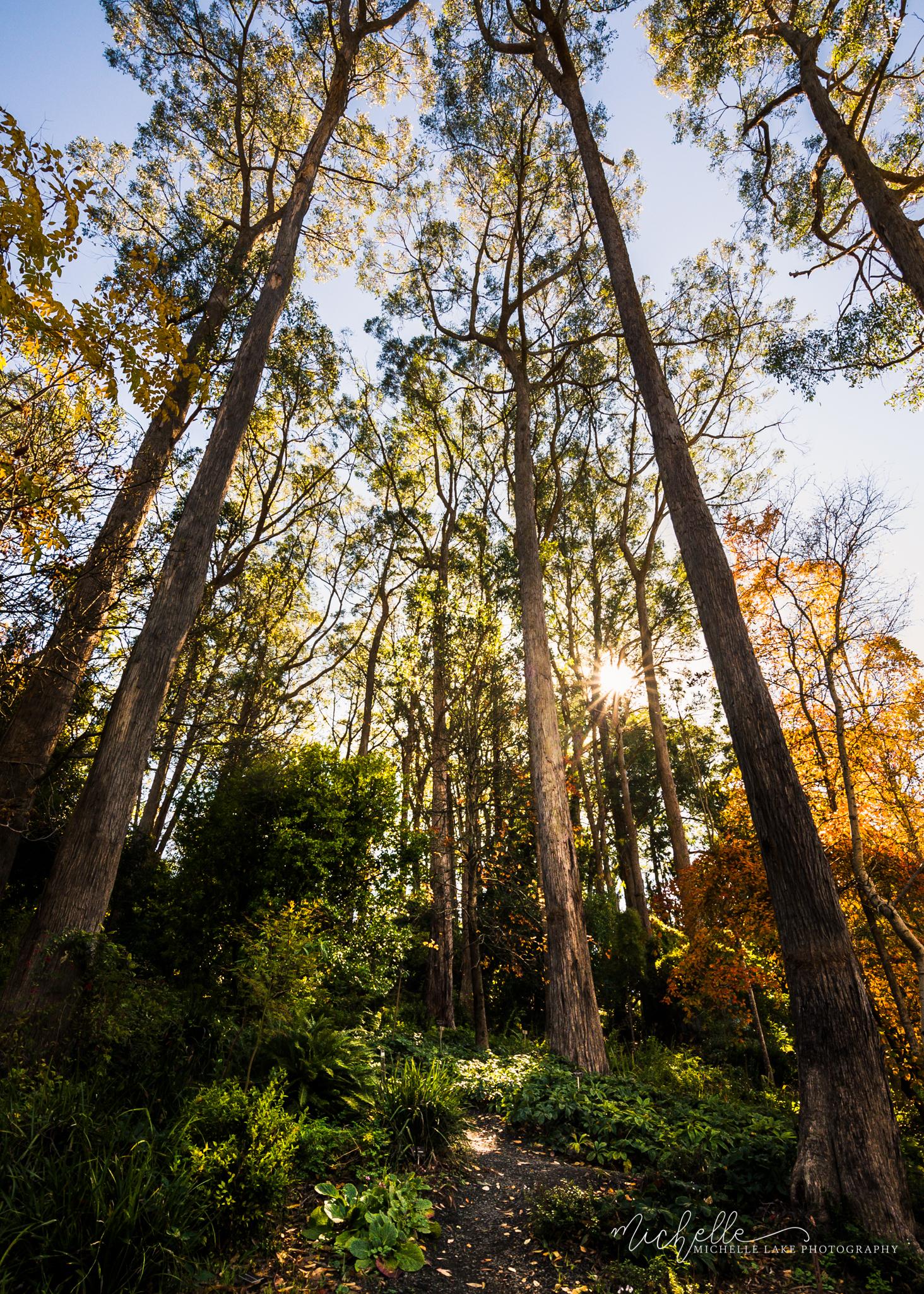 Tall trees, Adelaide Hills SA