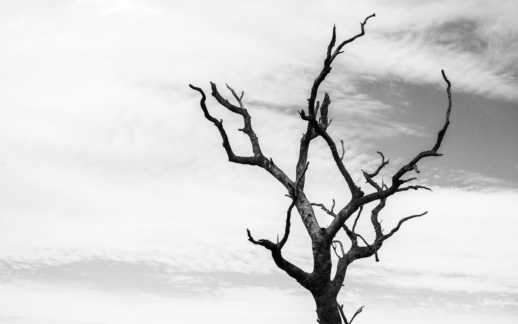 -Uluṟu-Kata Tjuṯa National Park, NT-  Michelle Lake ©