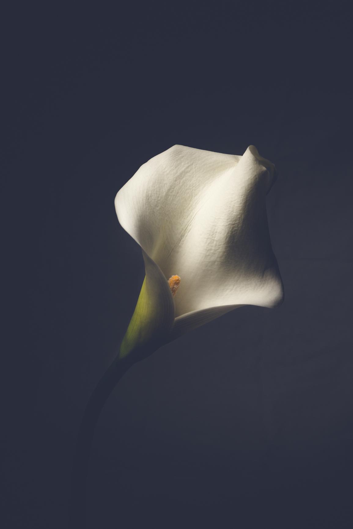 "The Botanicals, "" shades of white""  - Michelle Lake ©"