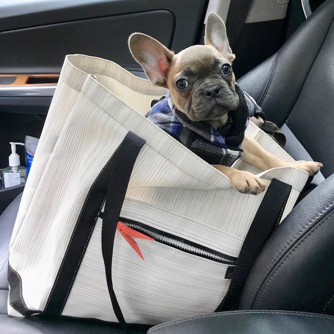 SHOP dog carrier copy 3.jpg