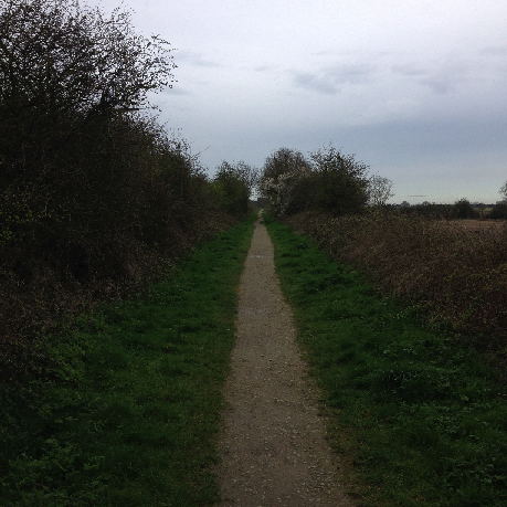 Cycling in the countryside to a soundtrack of bird calls.