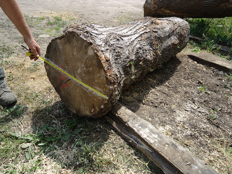 Lime log for carving the Christus Rex August 2011