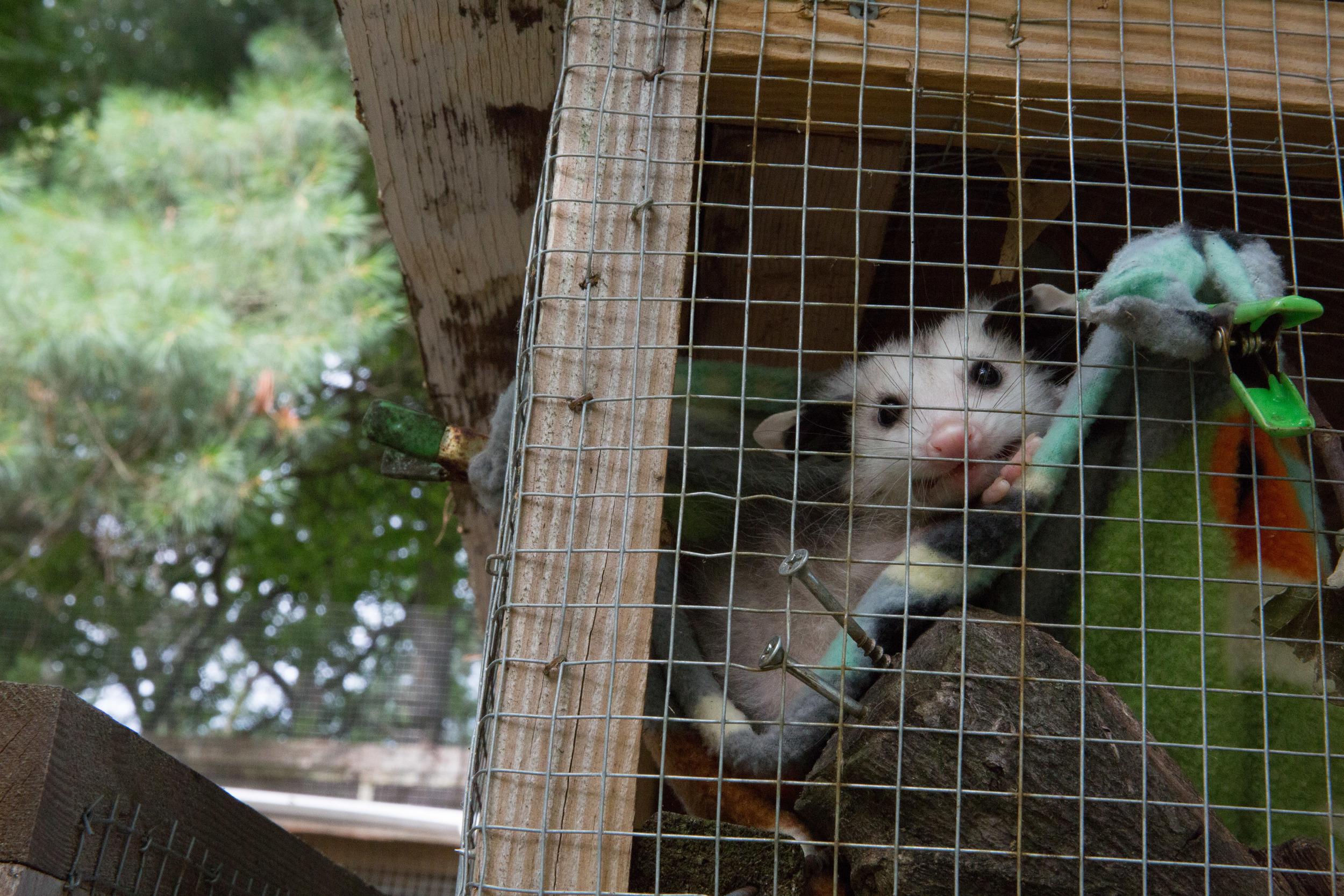wildlife rehab05.jpg