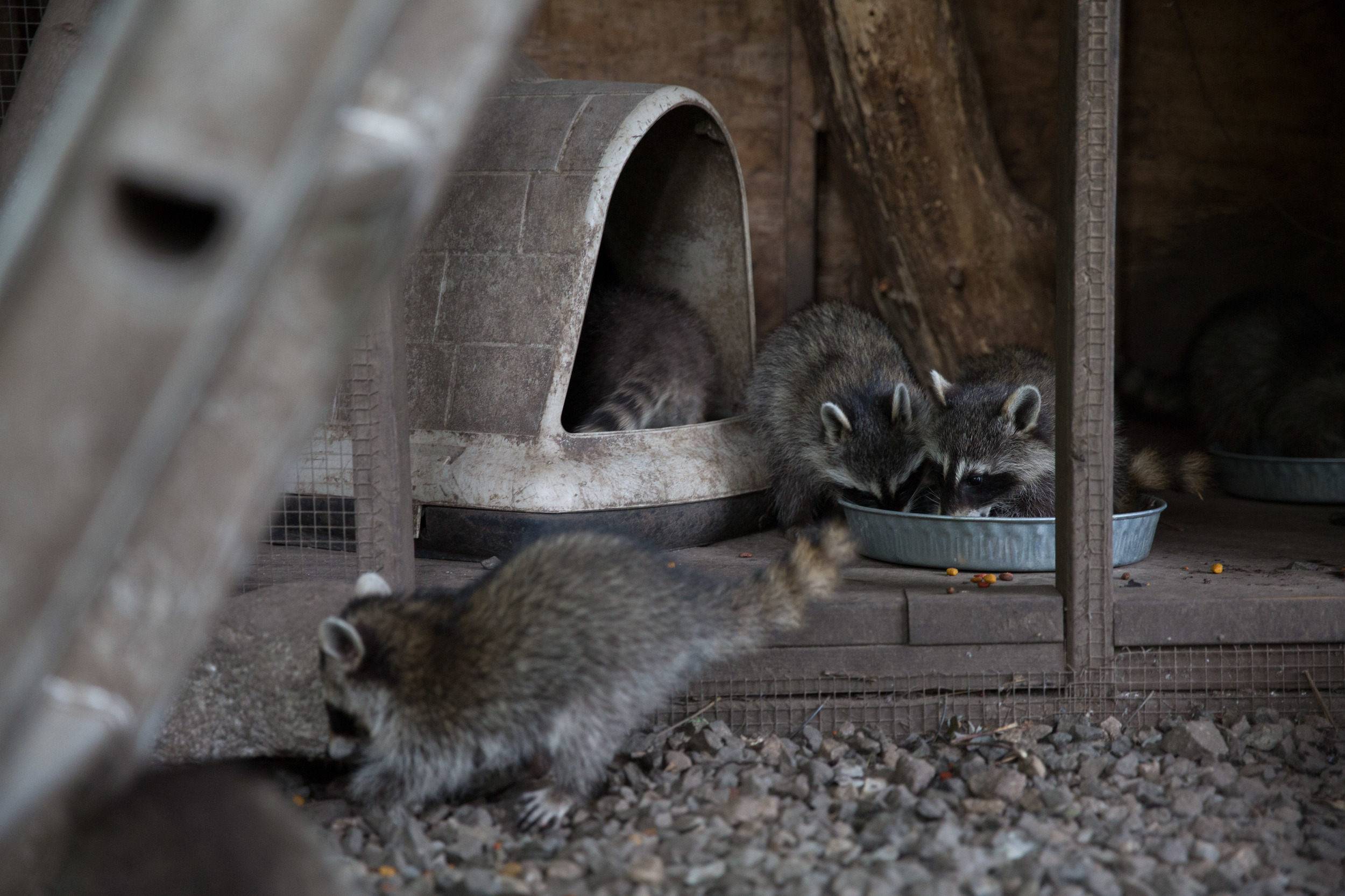 wildlife rehab07.jpg