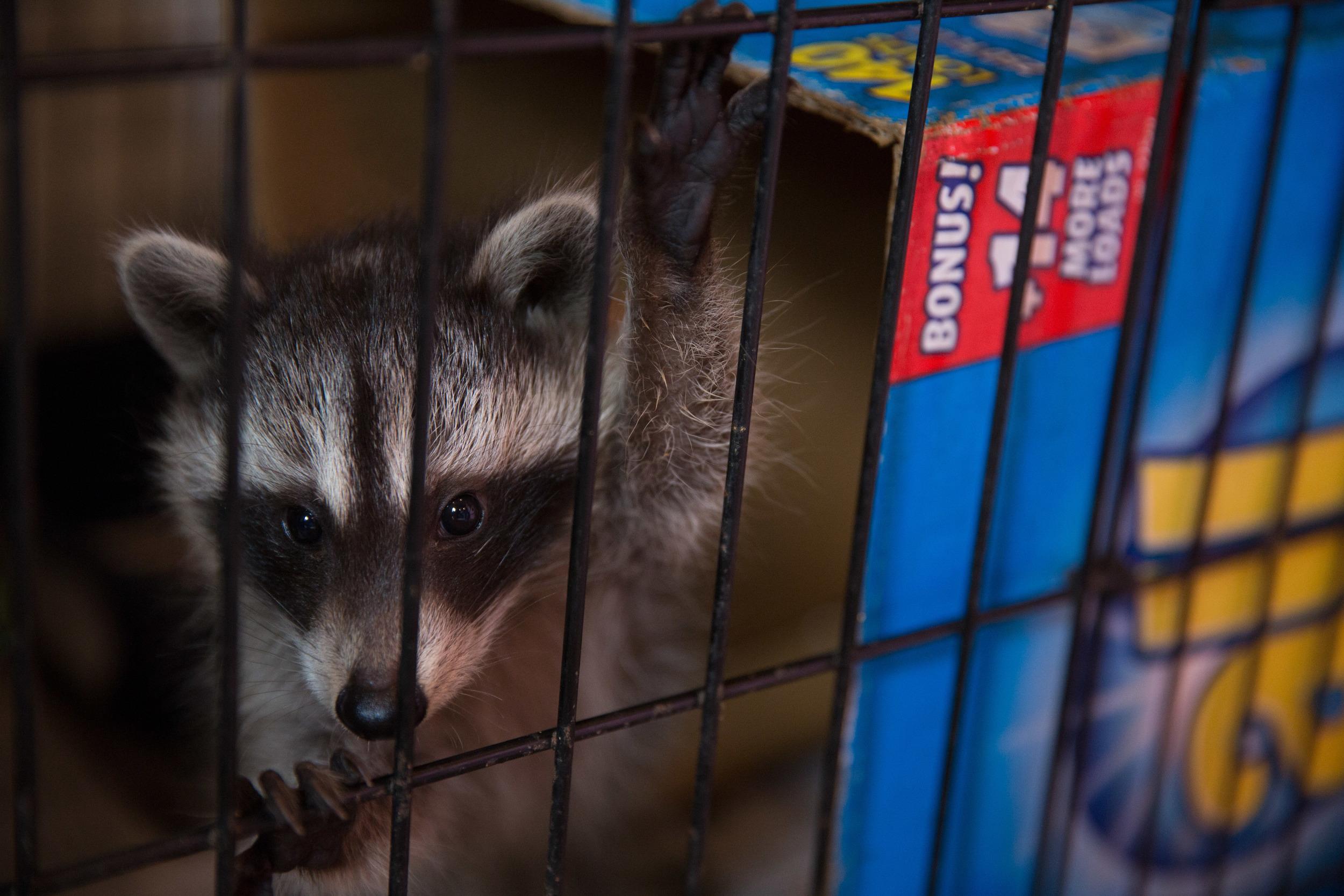 wildlife rehab10.jpg