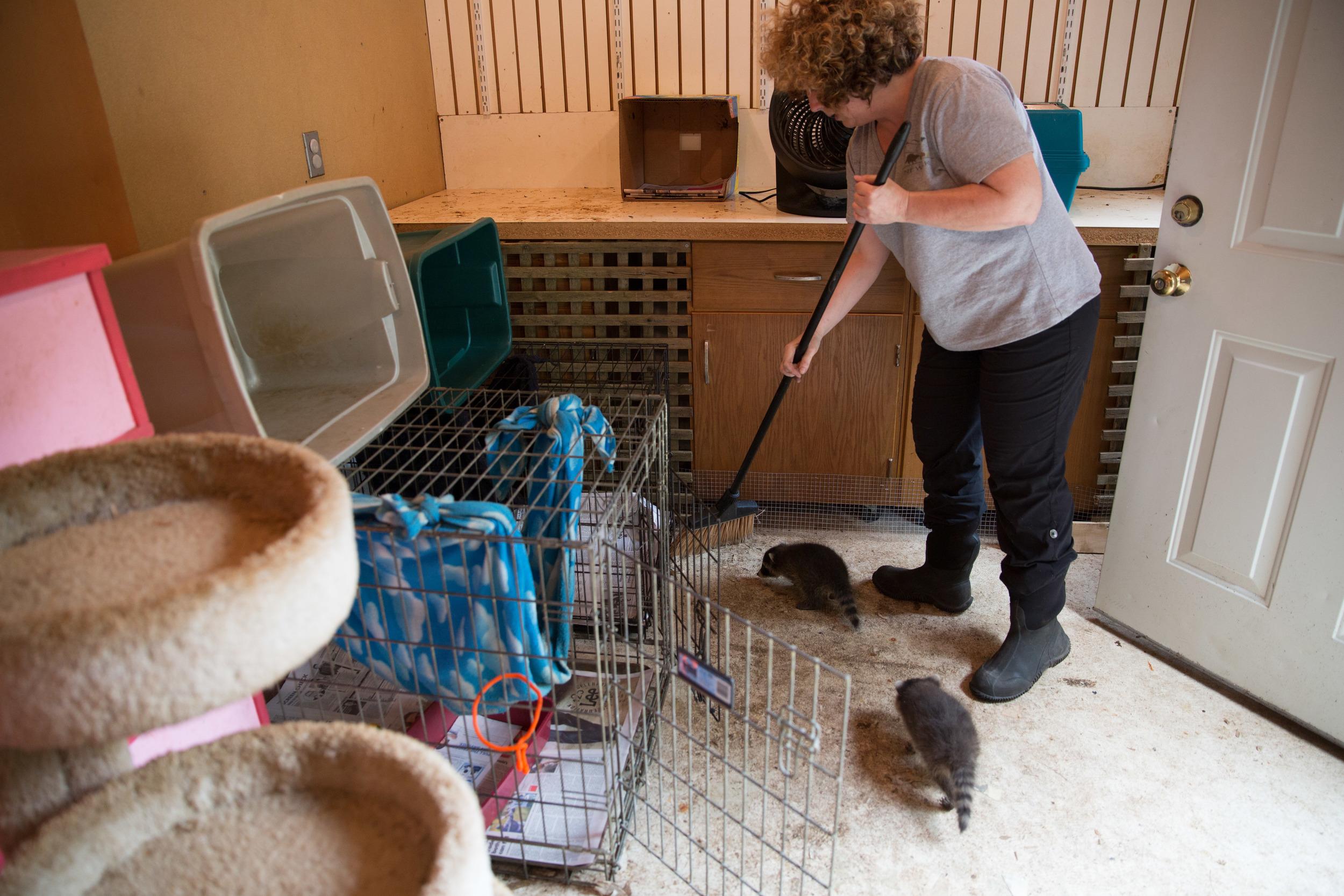 wildlife rehab11.jpg