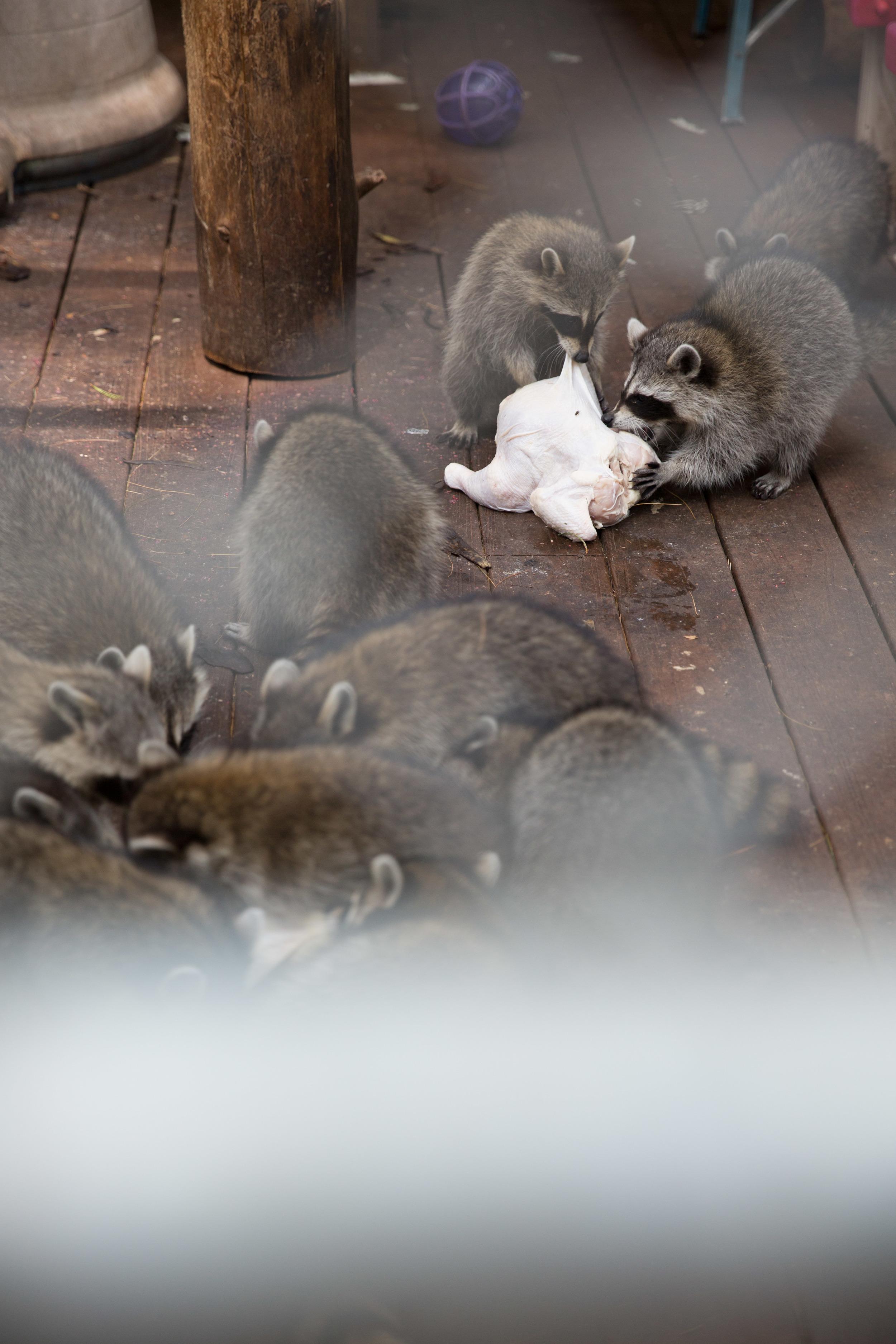 wildlife rehab15.jpg