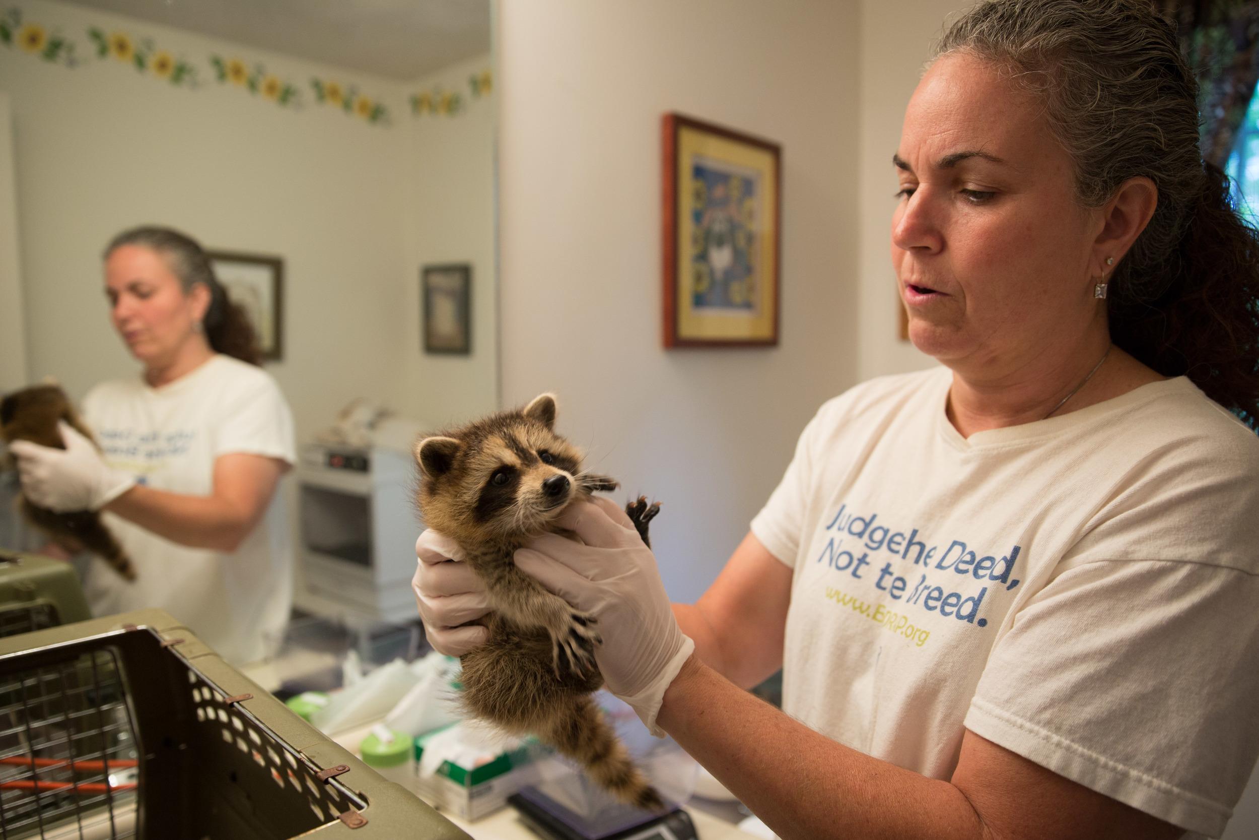 wildlife rehab16.jpg