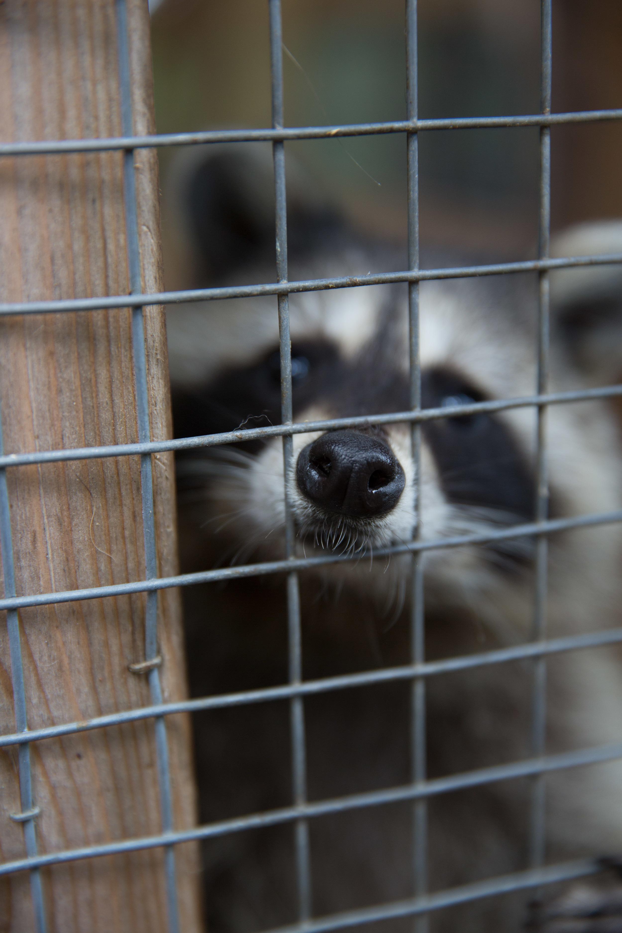 wildlife rehab20.jpg