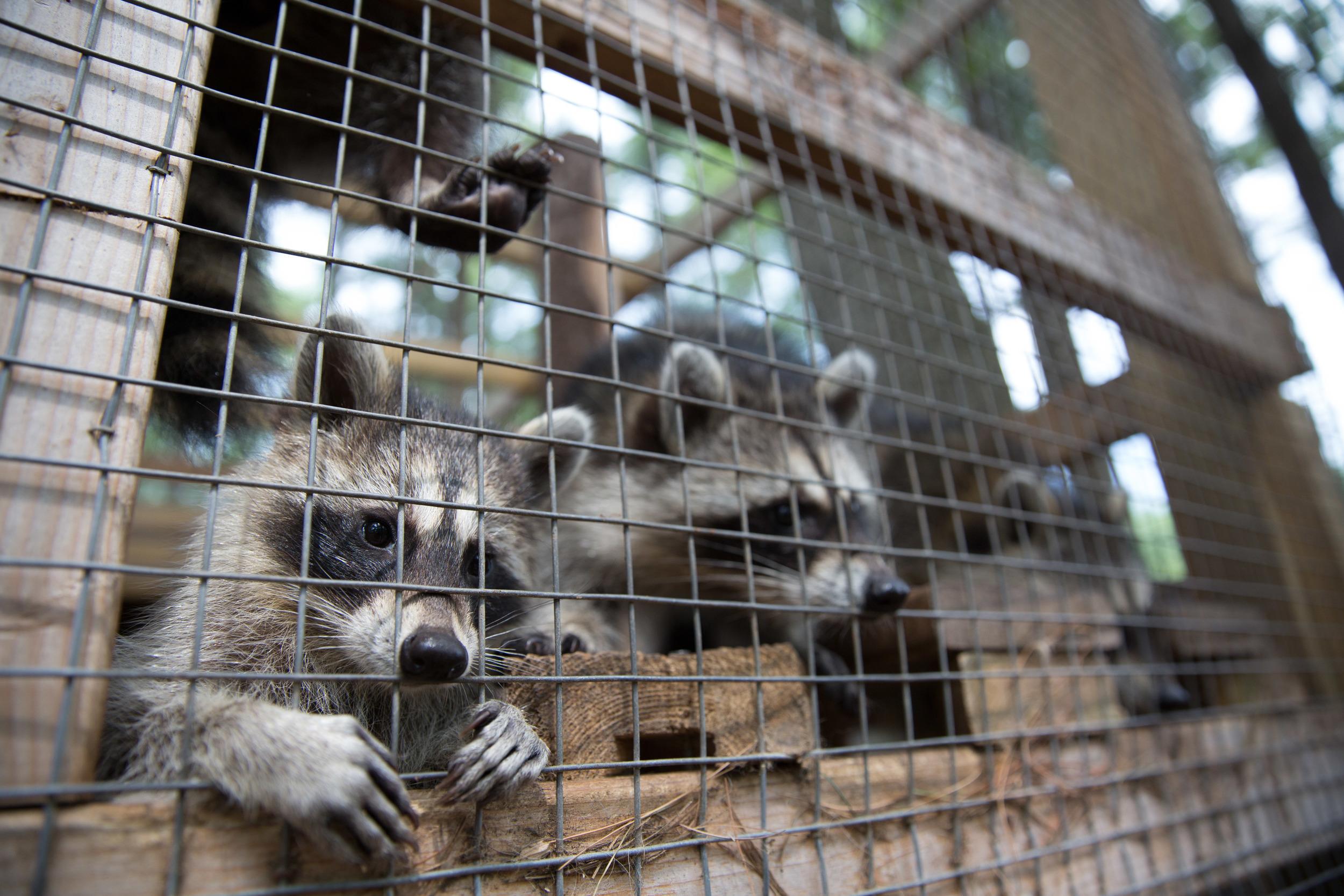 wildlife rehab19.jpg