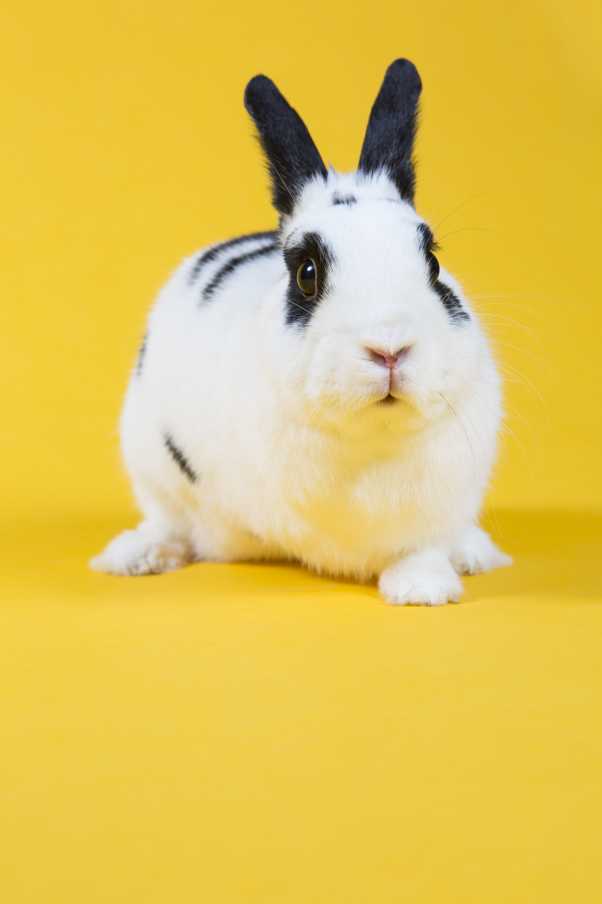 161222_2648_bunny253.JPG