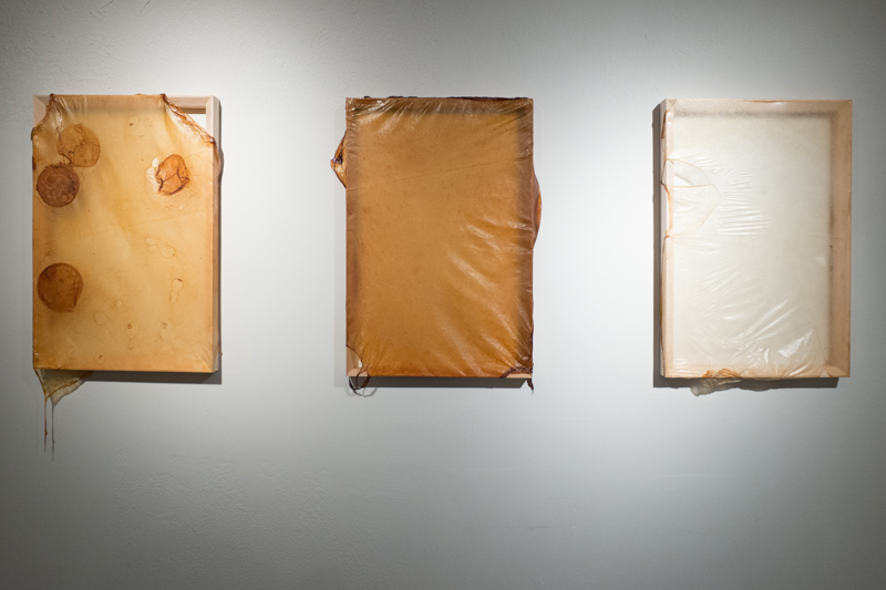 Skins (installation), Kombucha Cultures on Wood Frames, 2015