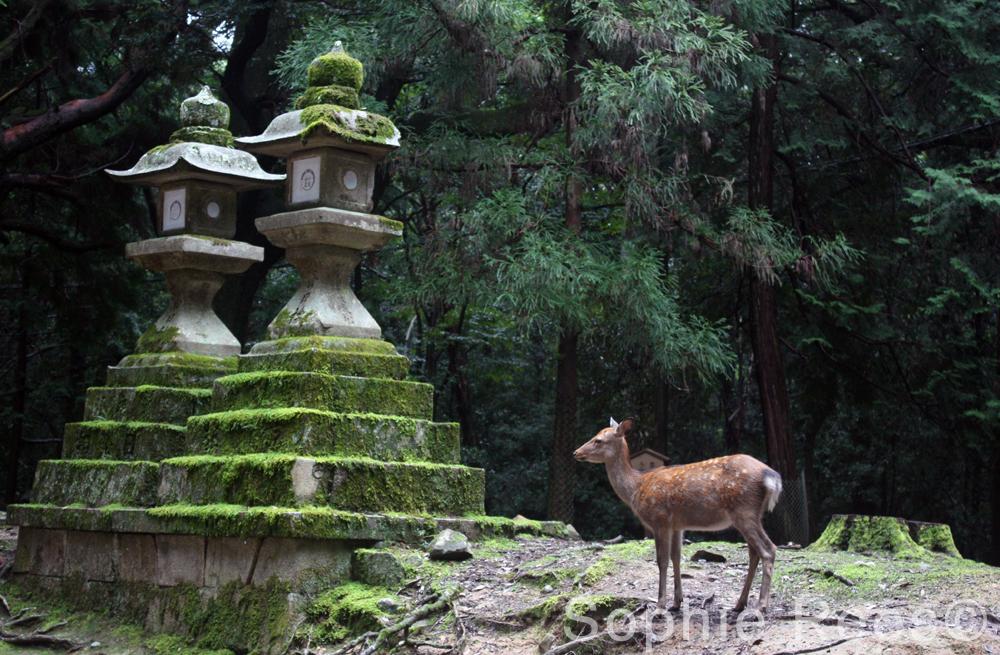 Nara Park, Nara, 2016