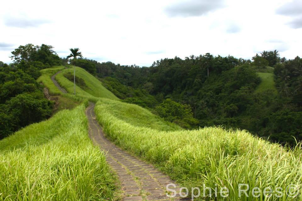 Ridge, Ubud, 2015
