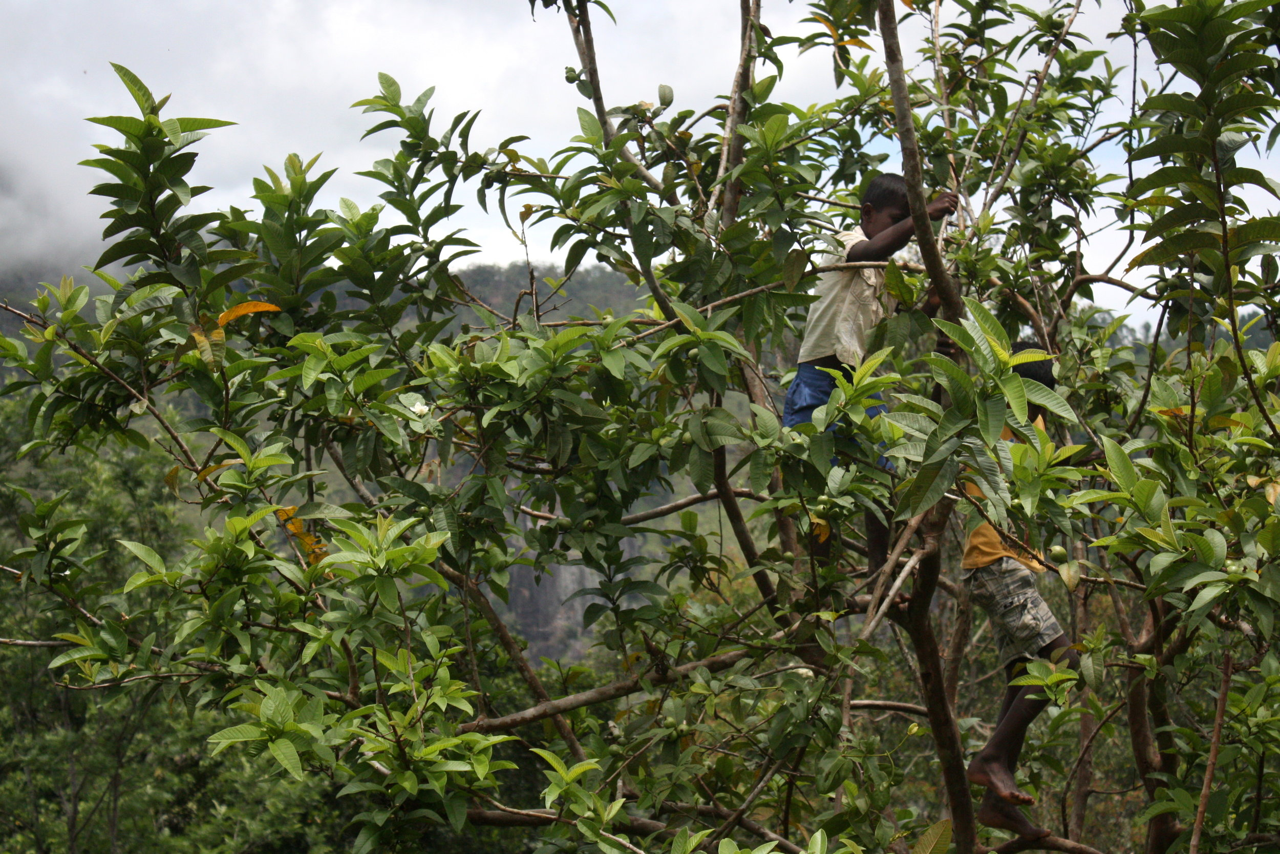 Tree climbing, 2018
