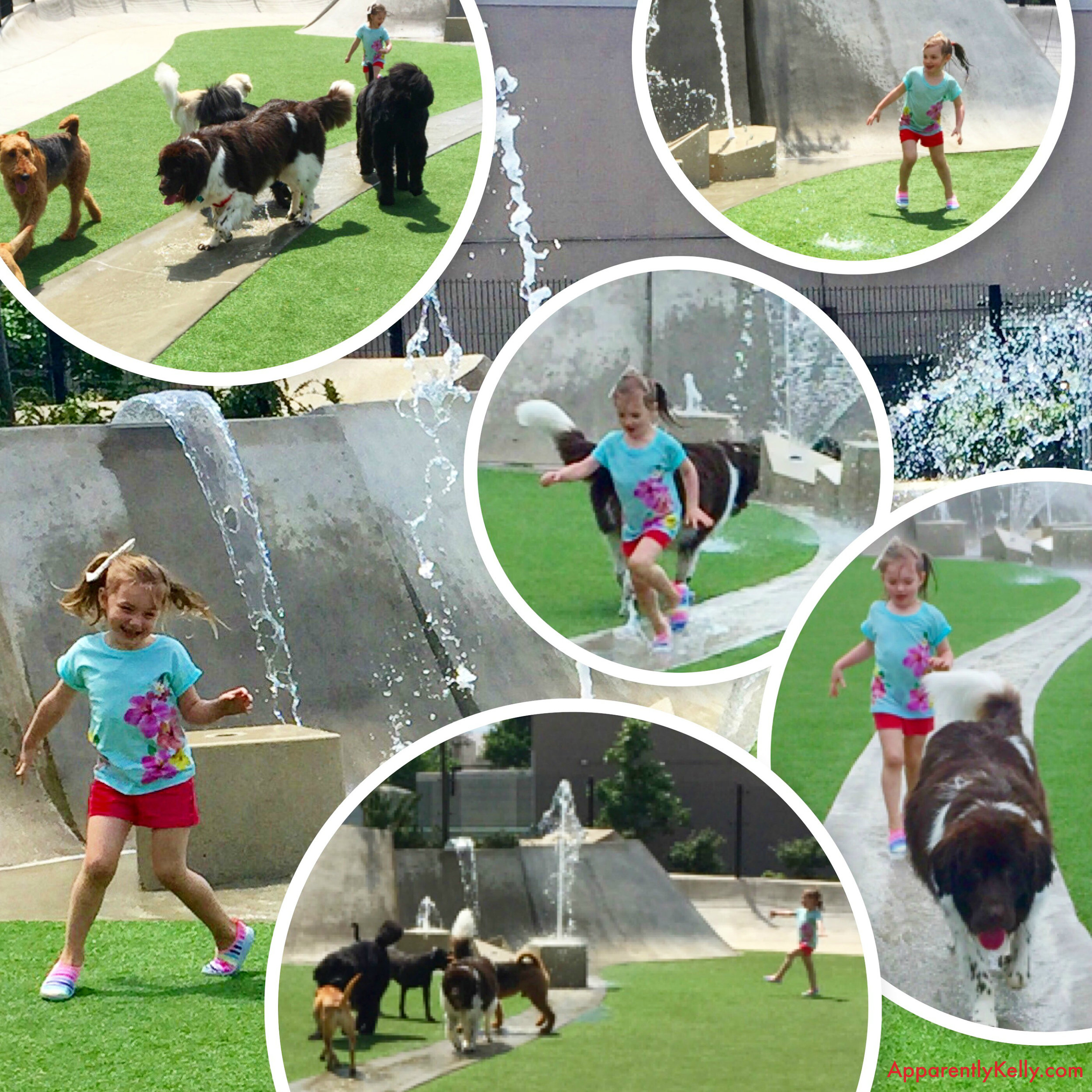 Dog Park Play Collage.jpg