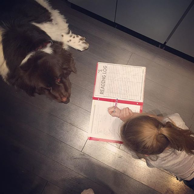 Sometimes you just need a homework buddy. #coralielovesbruce #sirbruceofchicago #citygirlcoralie #homeworkbuddy #gentlegiant #newfoundland #landseer #dogsofinstagram #dogsofchicago