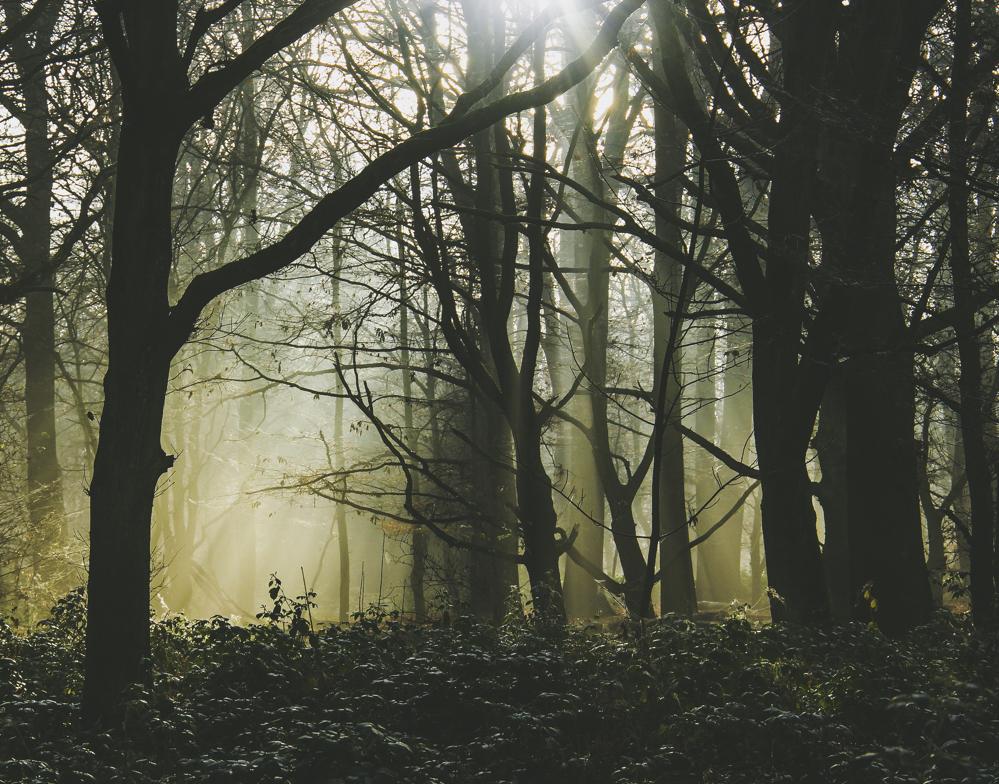 Autumn Woodland.jpg