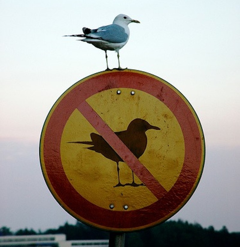 A seagull sits atop a sign, a sign showing a red line through a silhouette of a seagull, which happens to be facing exactly the same way as the real-life bird sitting on it.