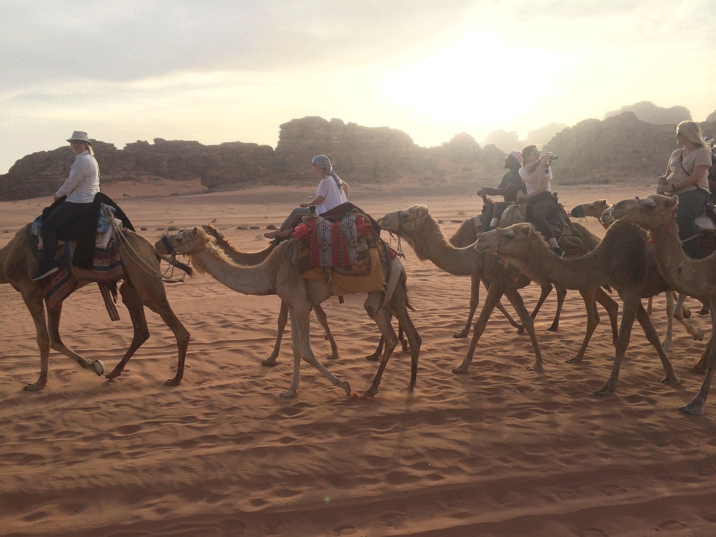 Wadi RUm Camels at Sunset4.JPG