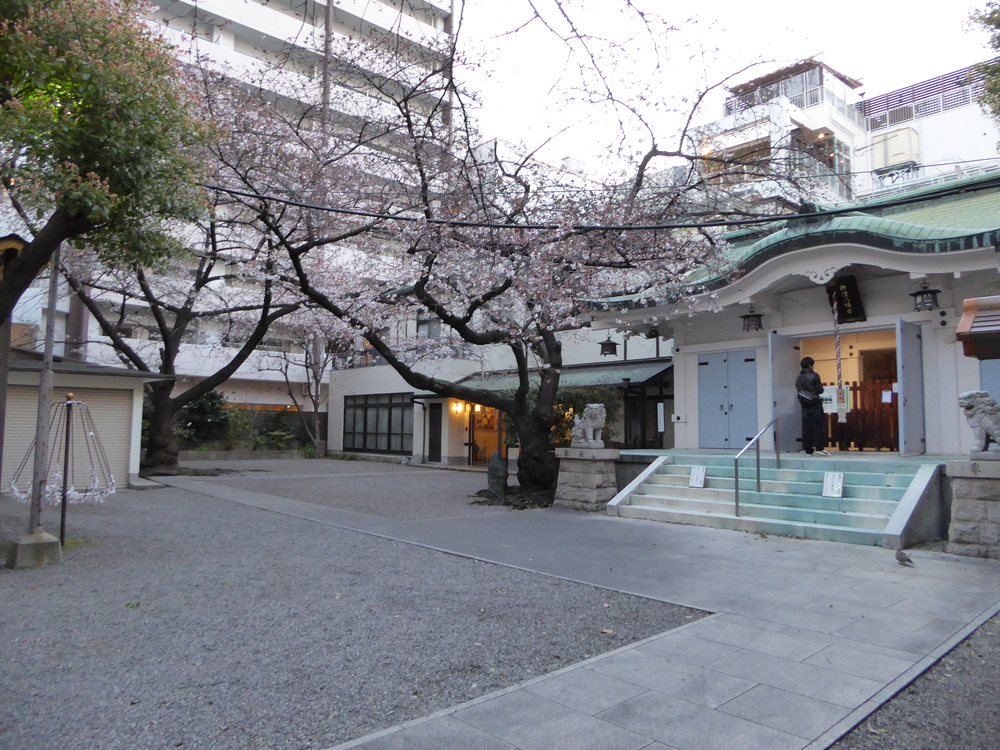 A hidden shrine and cherry blossom tree
