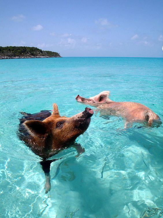 Nassau Bahamas 3.jpg
