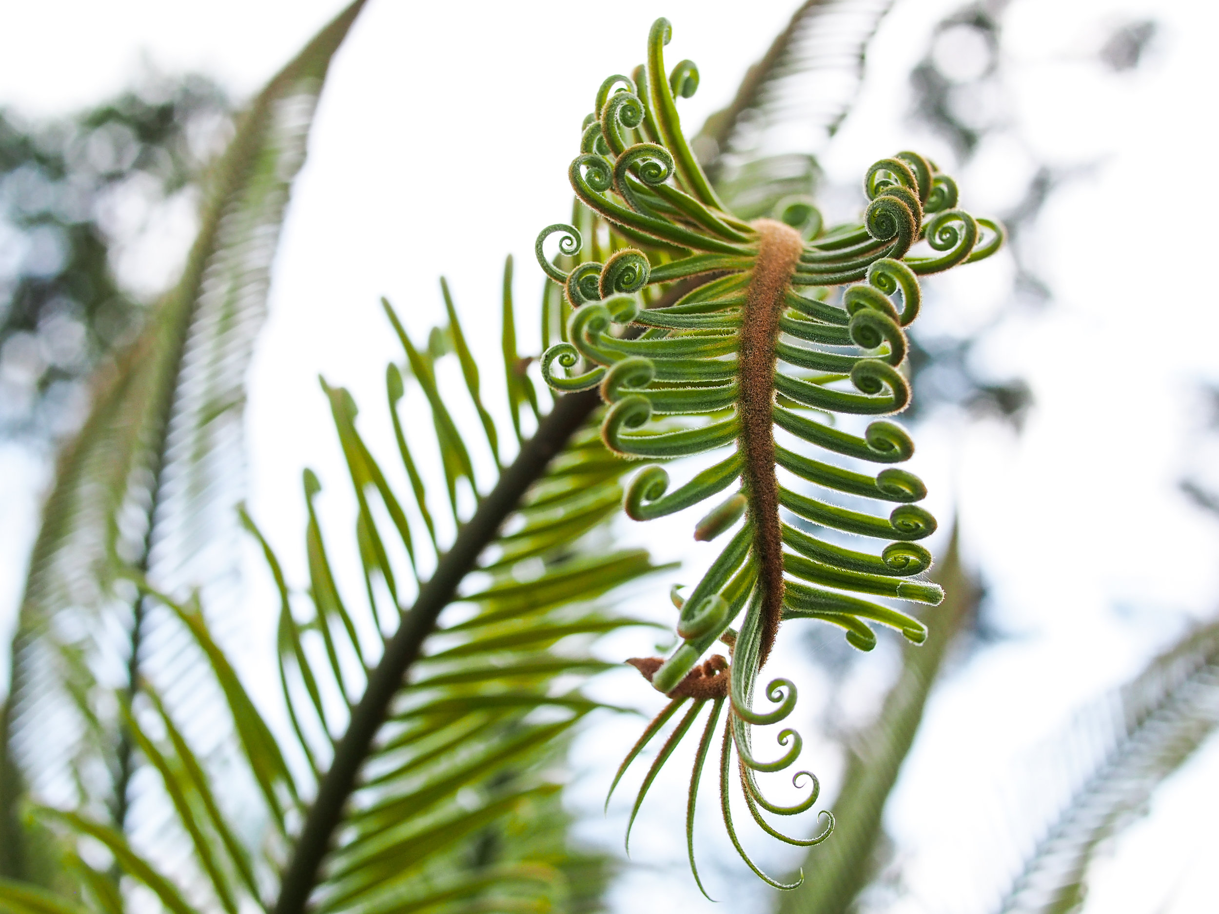 Fern - taken in the Issan province of Thailand