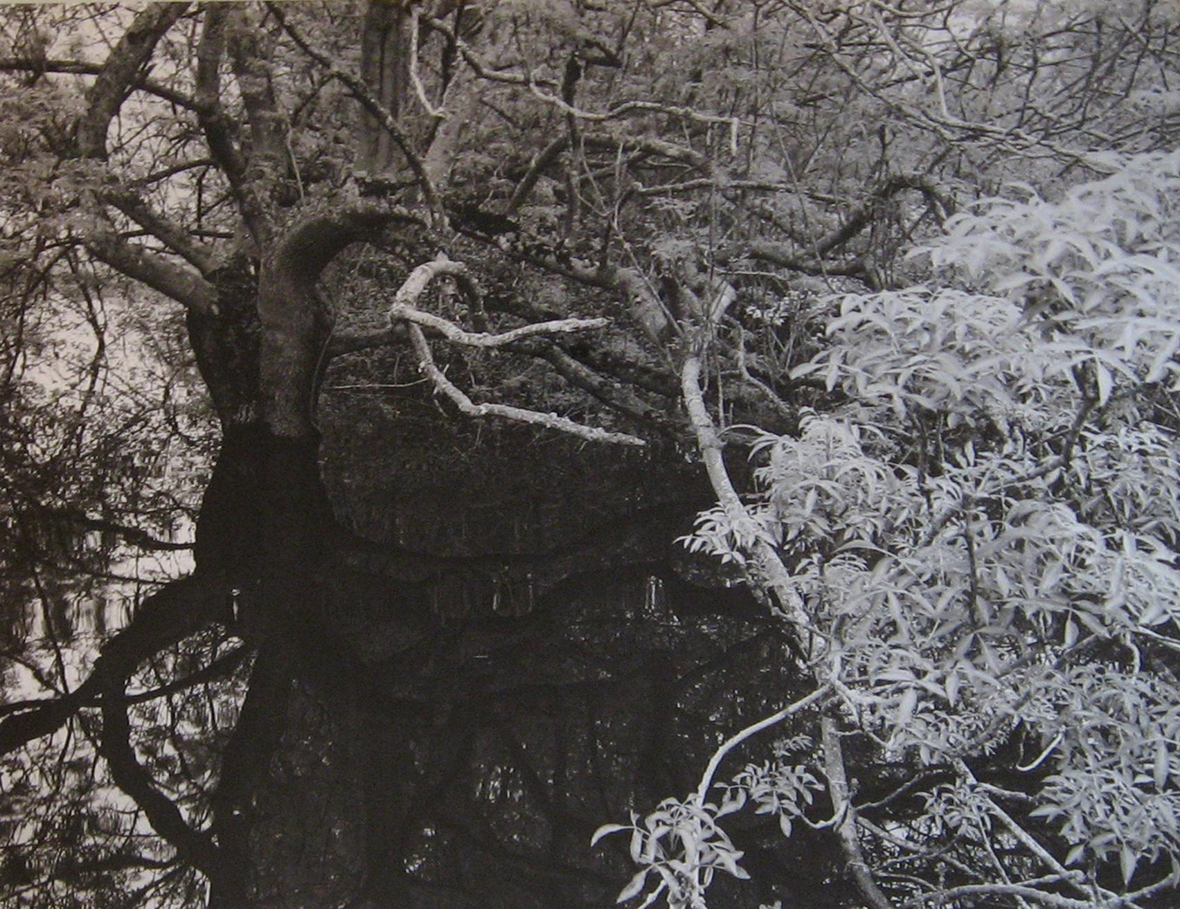 """""""L'eau Grande 7,"""" 2002, photograph, 20x24 in."""