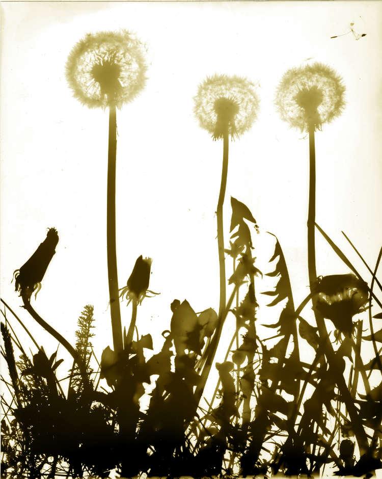 Primavera090.jpg