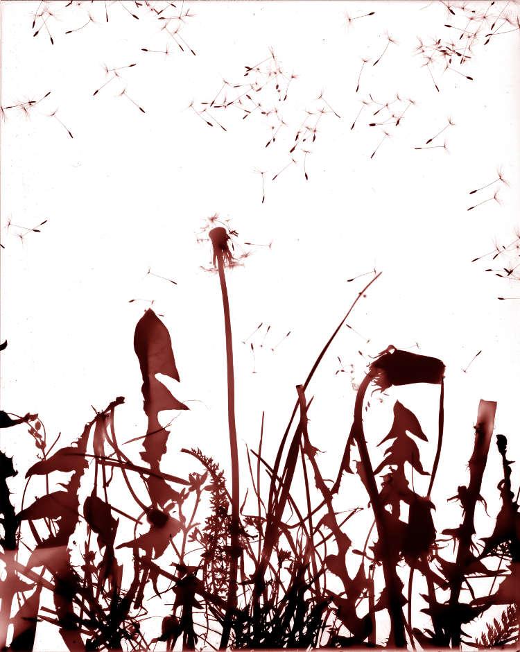 Primavera096.jpg