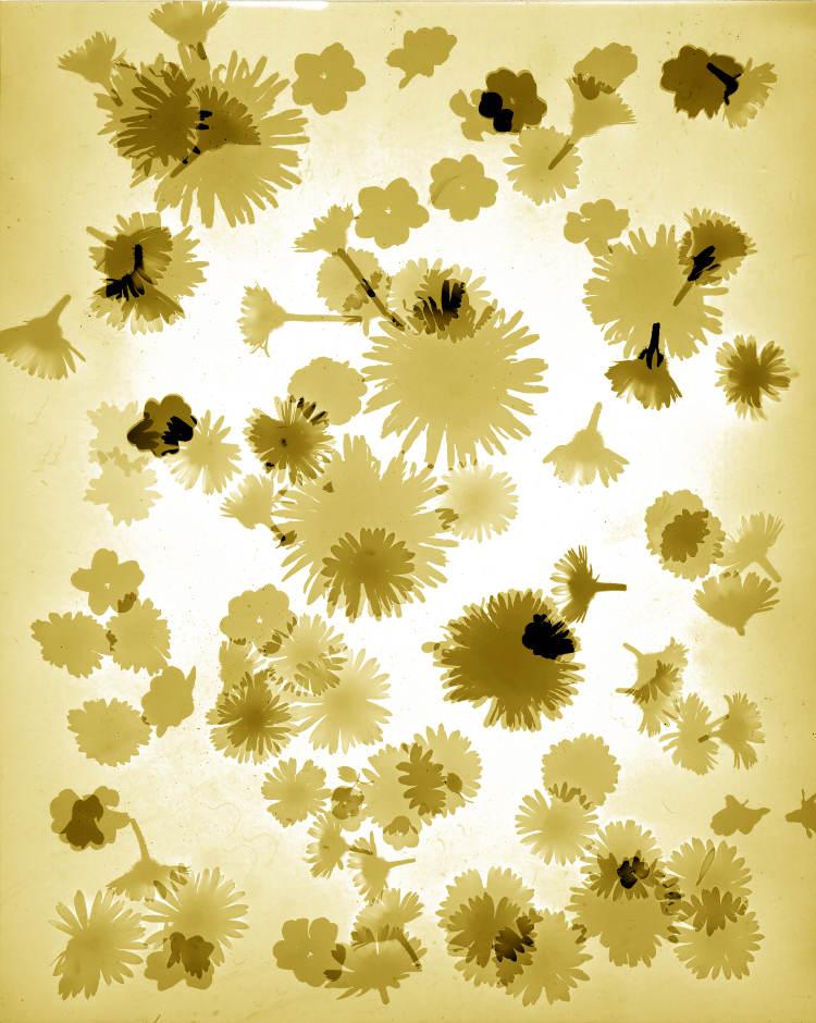 Primavera gelb.jpg