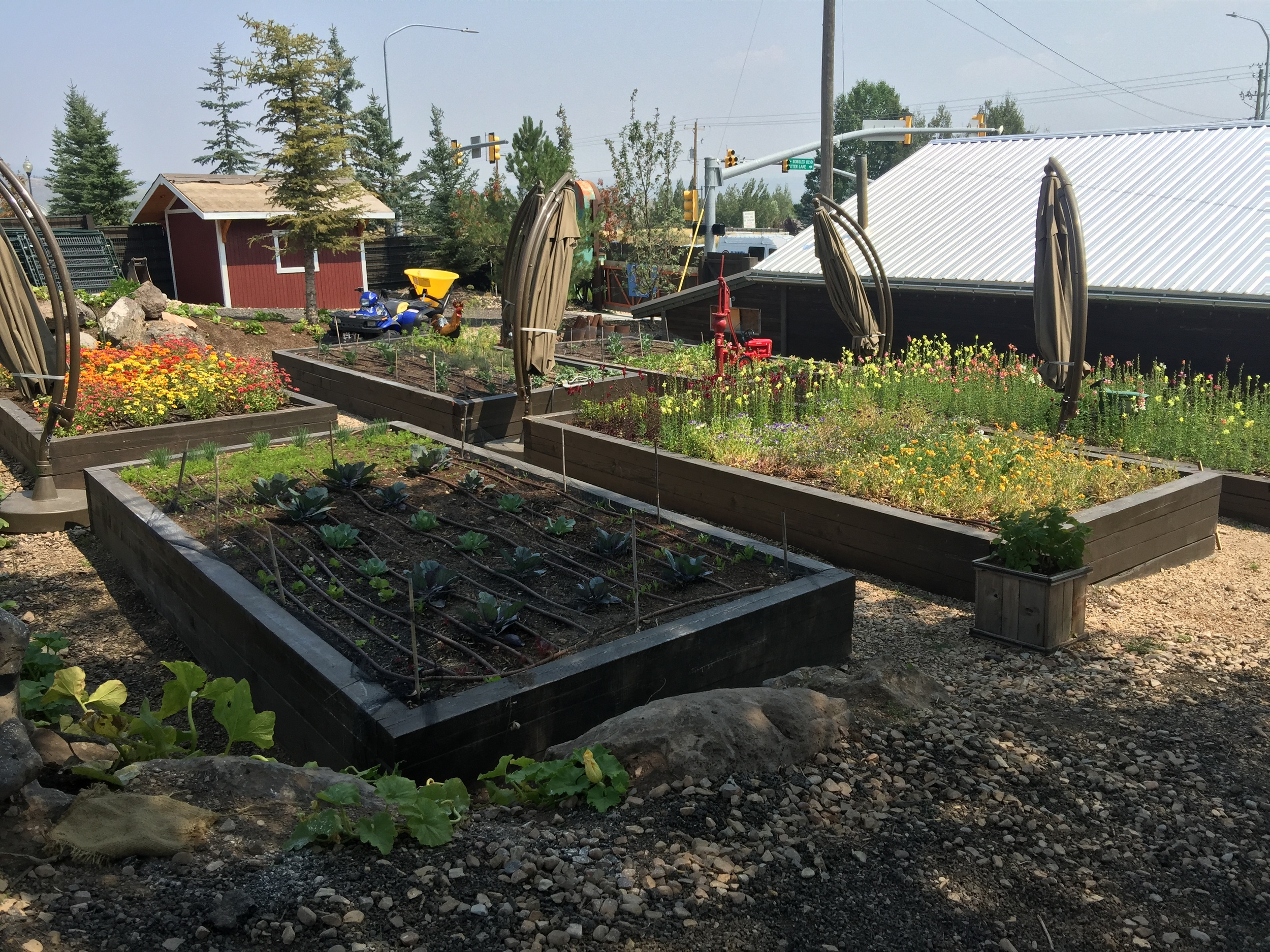 Garden beds at the farm.. growing all kinds of delicious veggies!