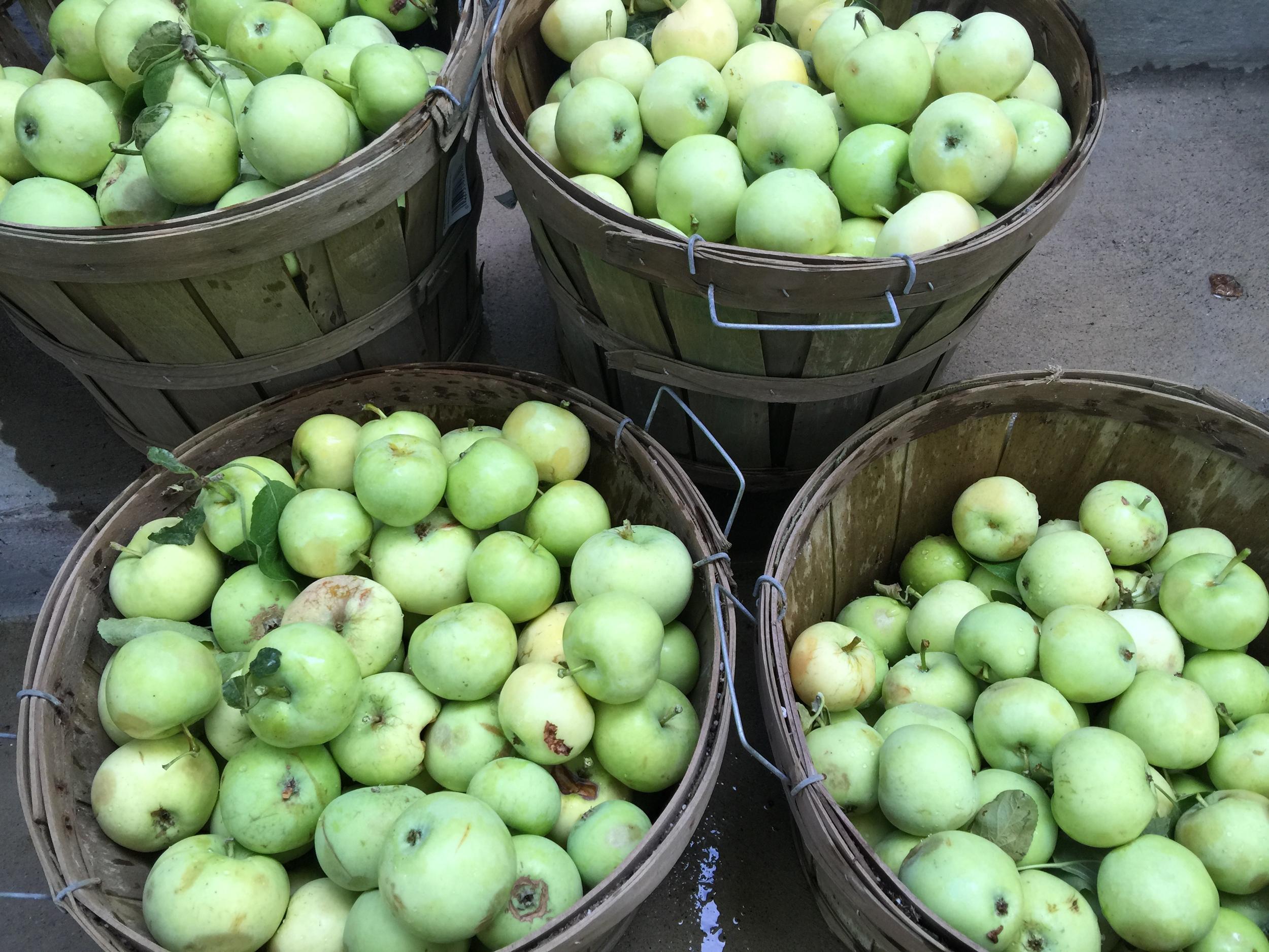 Freshly picked apples!