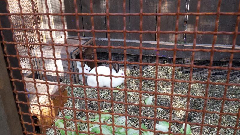 Bunnies (1).jpg