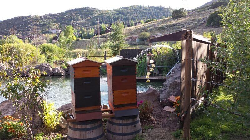 Italian Bees (1).jpg