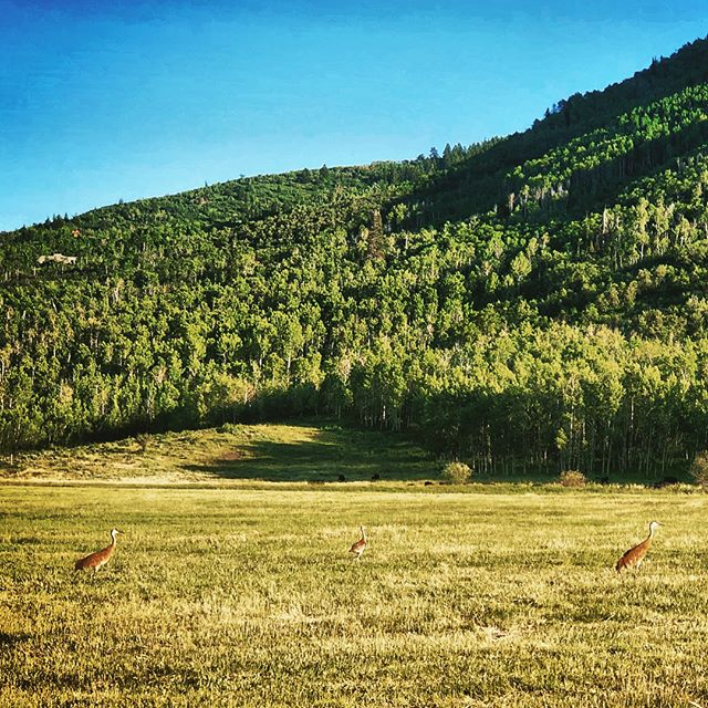 Park City days and nights on our #landmanagement property 🌄