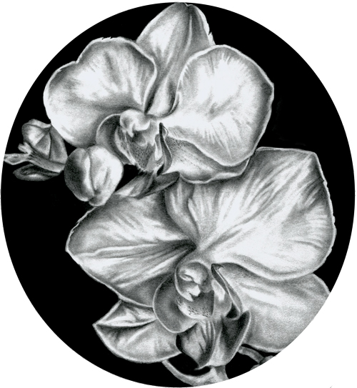 orchid-drawing-for-website.jpg