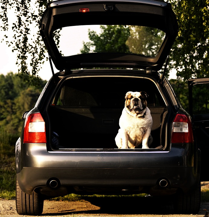 dog sitting in the back of a vehicle