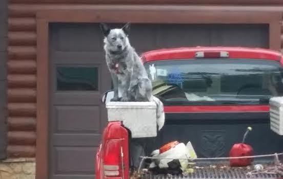 Kate sitting on Papaw Jack's truck at Laurel Fork Rustic Retreat
