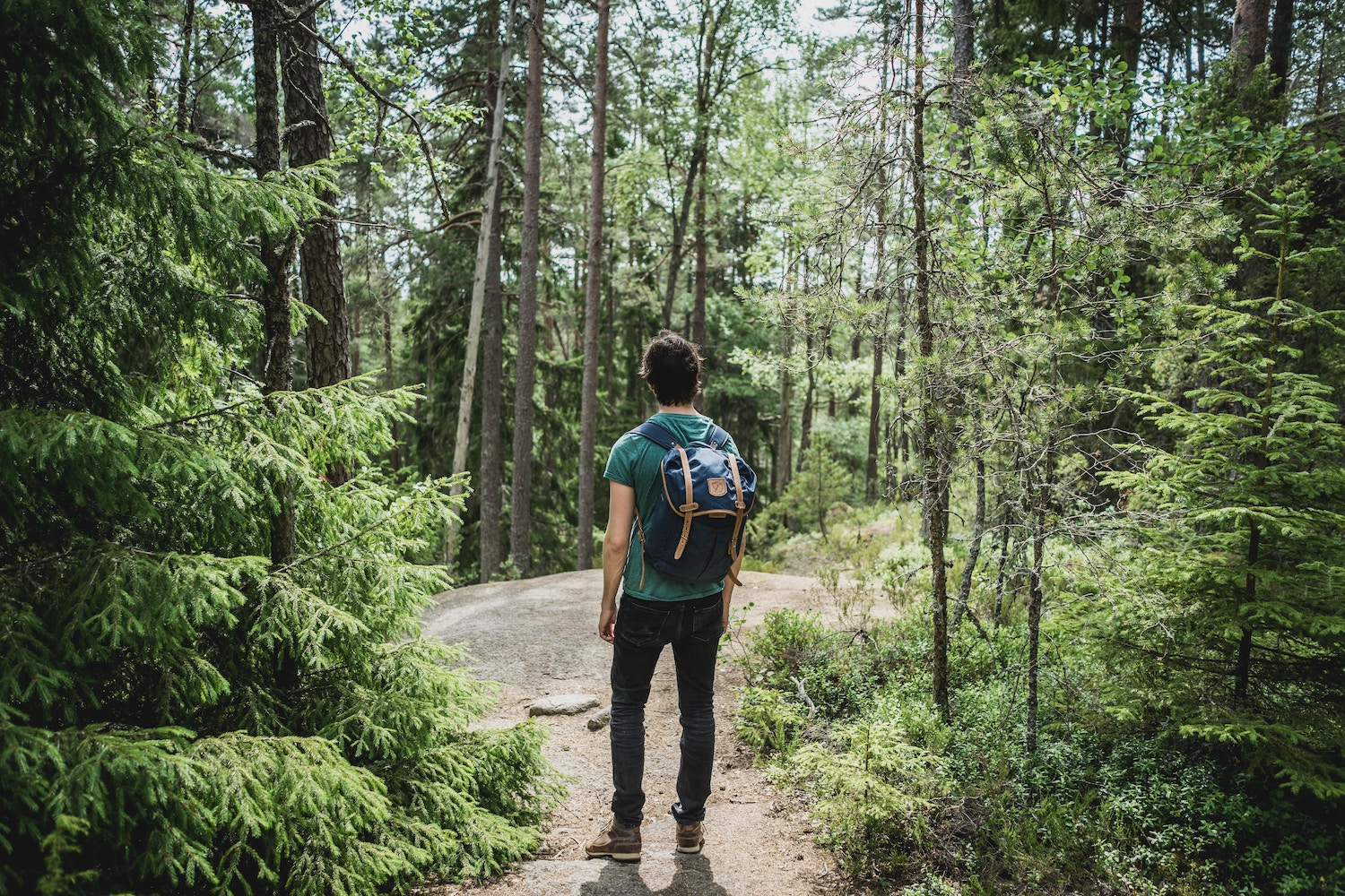 hiker standing on a trail in the forest